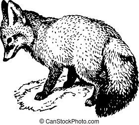 Fox - Little fox sitting on the ground