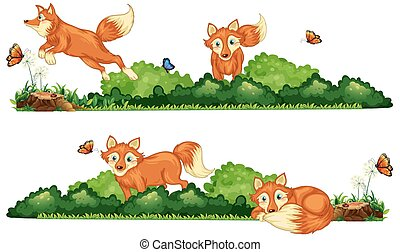 Foxes resting in the field