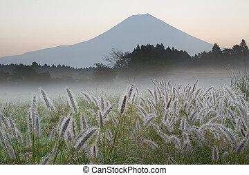 Foxtail Grass II