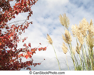 foxtails and red tree against cloud