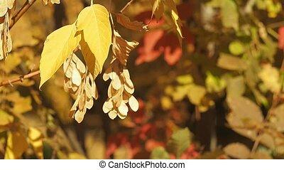 foyer., flétri, branches., wind., coloré, feuilles, prise vue., arbre, wood., brouillé, automne, arrière-plan., multicolore, sélectif, feuillage, forêt, oscillation, fin, doux