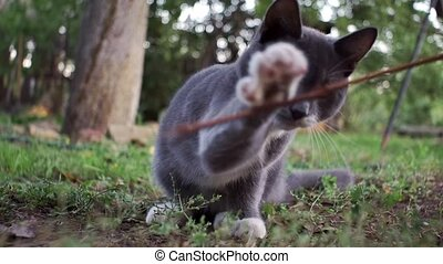 foyer sélectif, jouer, chaton, herbe, gris