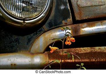 främre del, bil, blomma, apelsin