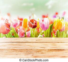 frånvarande, fjäder, bakgrund, av, färgglatt, tulpaner