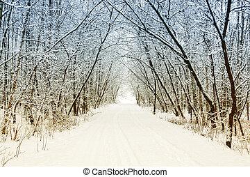 frío, y, nevoso, invierno, camino