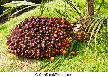 früchte, handfläche