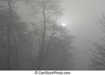 früh, winter, morgen