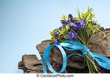 frühjahrsblumen, auf, a, blauer hintergrund