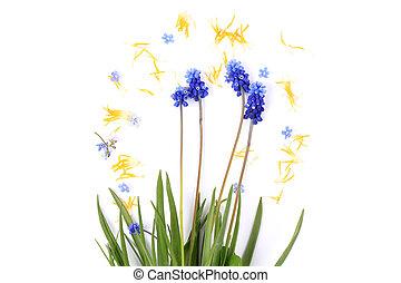 frühjahrsblumen, auf, a, weißer hintergrund, weinlese