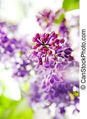 frühjahrsblumen, hintergrund