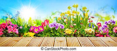 frühjahrsblumen, in, kleingarten