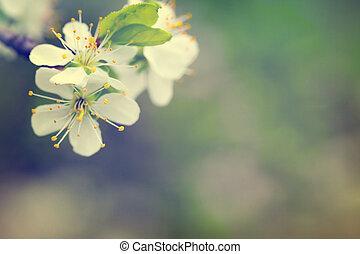 frühjahrsblumen