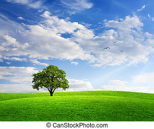 frühlingslandschaft, mit, eiche, blau, himmelsgewölbe
