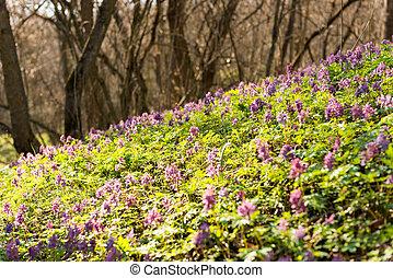frühlingslandschaft, mit, wald, flowers.