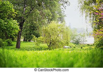 frühlingslandschaft, park