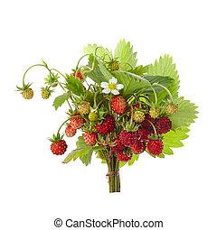 fragaria, salvaje, fresas, blanco, fondo., permisos rojos, ...