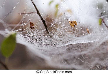 Fragile spider net in early in a foggy wet and cold morning.