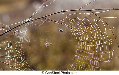 Fragile spider net in early in a foggy wet and cold morning,...