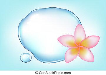 fragipani, encima, agua
