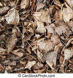 fragment, feuilles, vieux, séché
