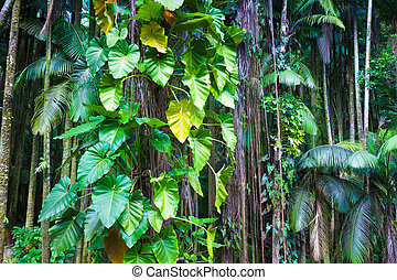 Fragment of a tropical jungle