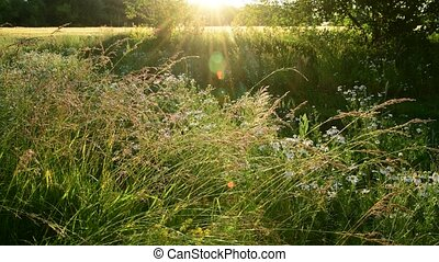 fragment of beautiful Meadow in the backlight - a fragment...