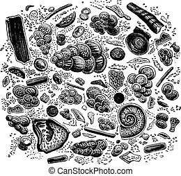 Fragment of chalk seen under a microscope, vintage engraving.