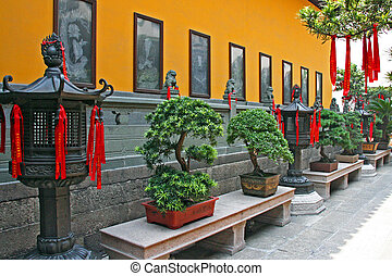 Fragment of Chinese Temple With Row Of Bonsai Trees