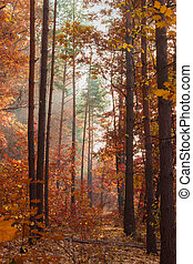 Fragment of deciduous and conifers forest in autumn morning