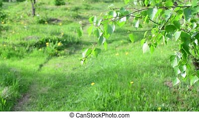 Fragment of park with branch of birch - Fragment of the park...