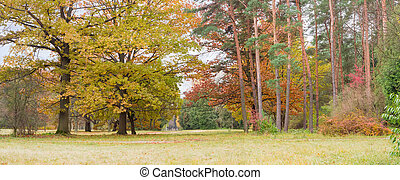 Fragment of the autumn park with deciduous and conifers trees