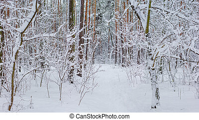 Fragment of the winter forest after snowfall