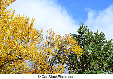 Fragment of trees whose leaves change color in the autumn season