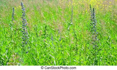 Fragment of wild meadow with flowers and plants