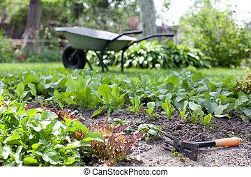 fragment, van, tuin, bedden, met, een, jonge, verse kruiden
