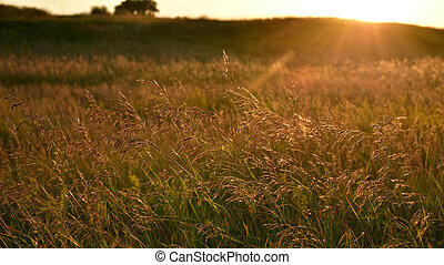 Fragments of the wild meadow in rays of setting sun. Nature of Russia
