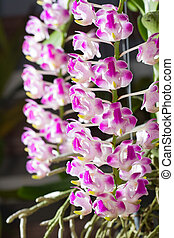 fragrant orchid flowers in the botanic garden