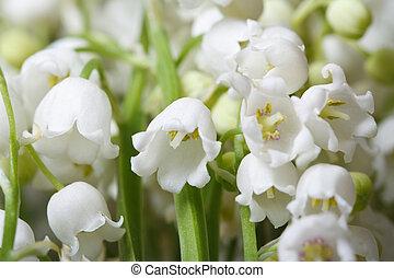 fragrante, gigli, fiori, fondo, floreale, valle