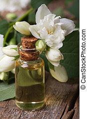 fragrante, olio, di, gelsomino, fiori, macro, verticale
