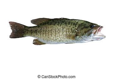 frais, attrapé, fish