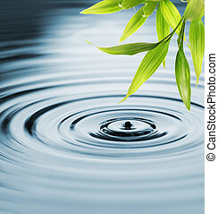 frais, bambou, feuilles, sur, eau