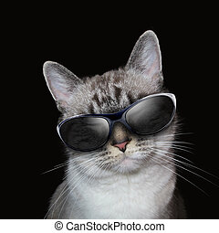 frais, chat blanc, à, fête, lunettes soleil, sur, noir