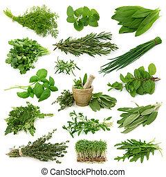 frais, collection, herbes