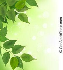 frais, feuilles, arrière-plan vert, nature