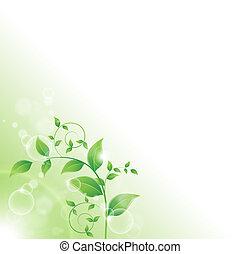 frais, feuilles, vert, branche