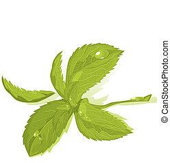 frais, feuilles, vert menthe