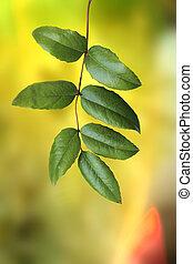 frais, feuilles, vert, nouveau