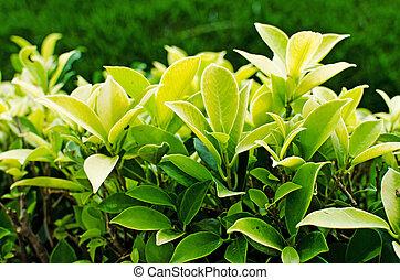t plante jardin macro haricots verts frais closeup t plante ext rieur jardin. Black Bedroom Furniture Sets. Home Design Ideas