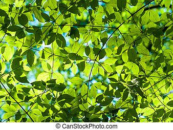 frais, feuilles vertes, dans, les, forêt