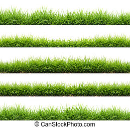frais, herbe, isolé, vert, printemps